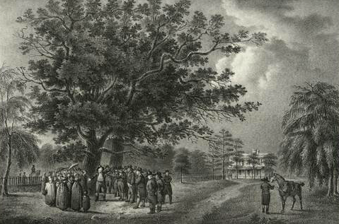 A black and white etching of a large oak tree with people in colonial dress surrounding the base of the tree.