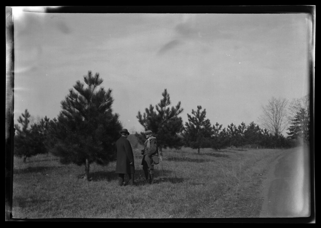 A black and white photo of two men standing talking to one another, next to a fairly young evergreen tree that is perhaps about 15ft tall. Similar evergreens stretch out into the background of the photo.